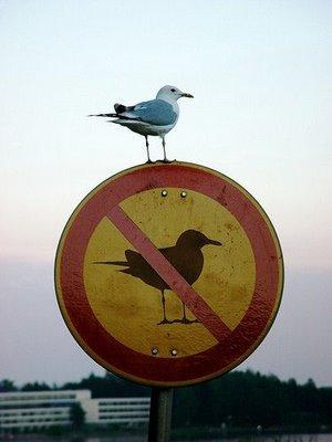 rompiendo-las-reglas.jpg