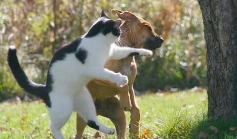 gato_perro.jpg
