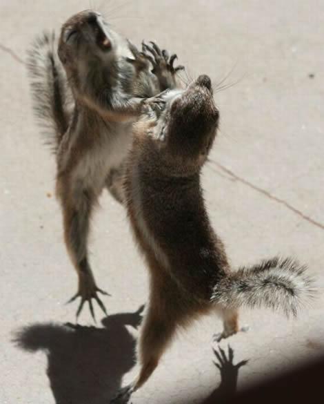 pelea-ardillas-1.jpg