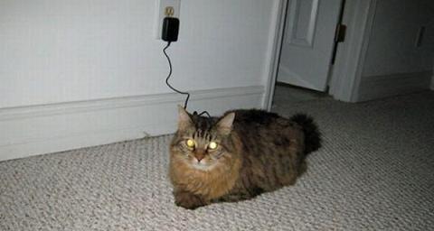 https://www.blogdehumor.com/wp-content/2009/09/gato_cargandose.jpg