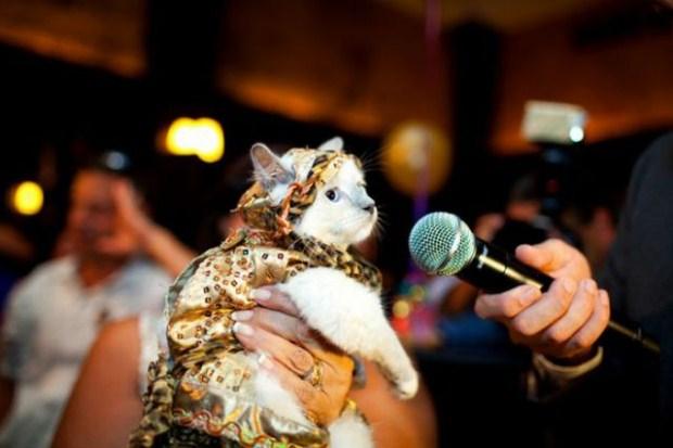 gatos_disfrazados11