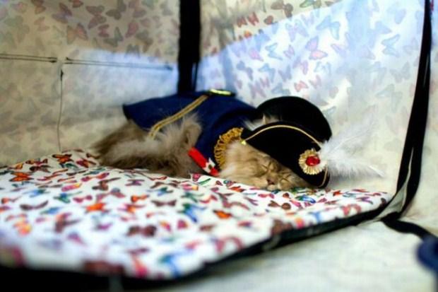 gatos_disfrazados17