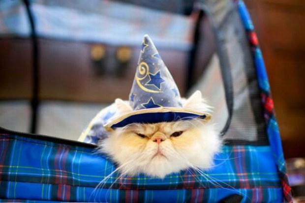 gatos_disfrazados22