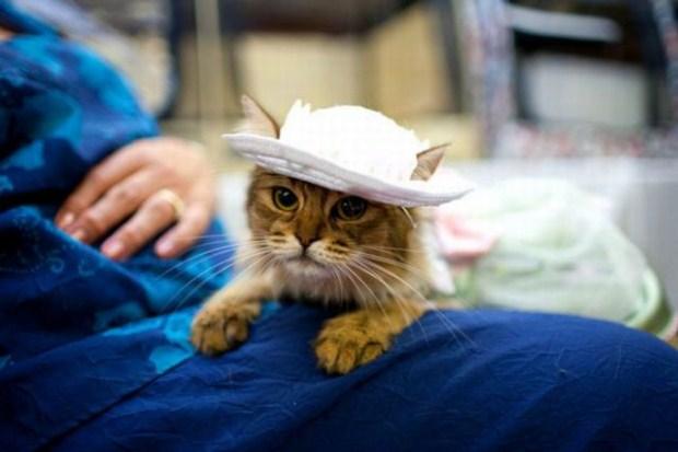 gatos_disfrazados23