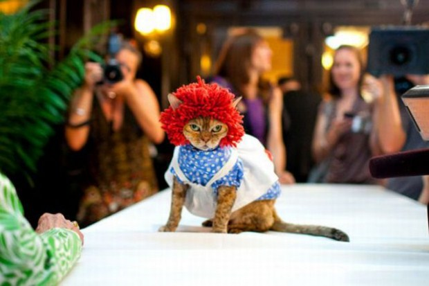 gatos_disfrazados26