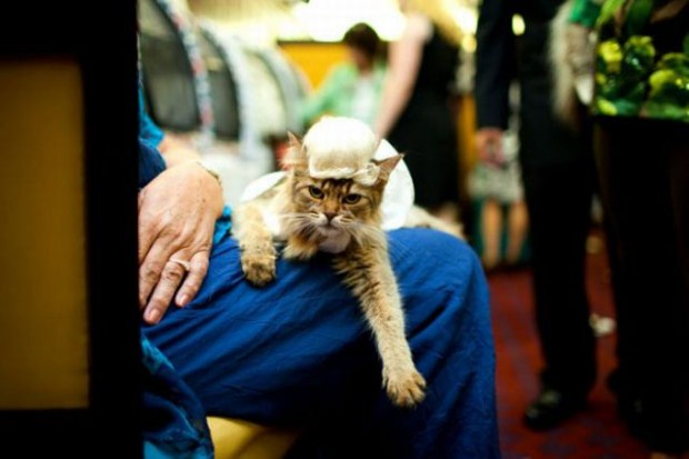 gatos_disfrazados28