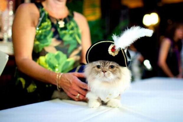 gatos_disfrazados30