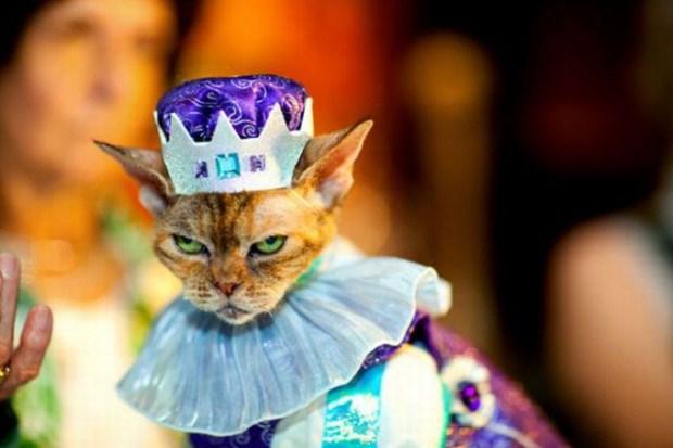 gatos_disfrazados9