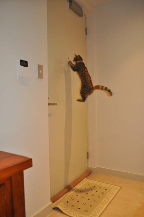 ===Para el mirón de turno...=== - Página 7 Gato-puerta