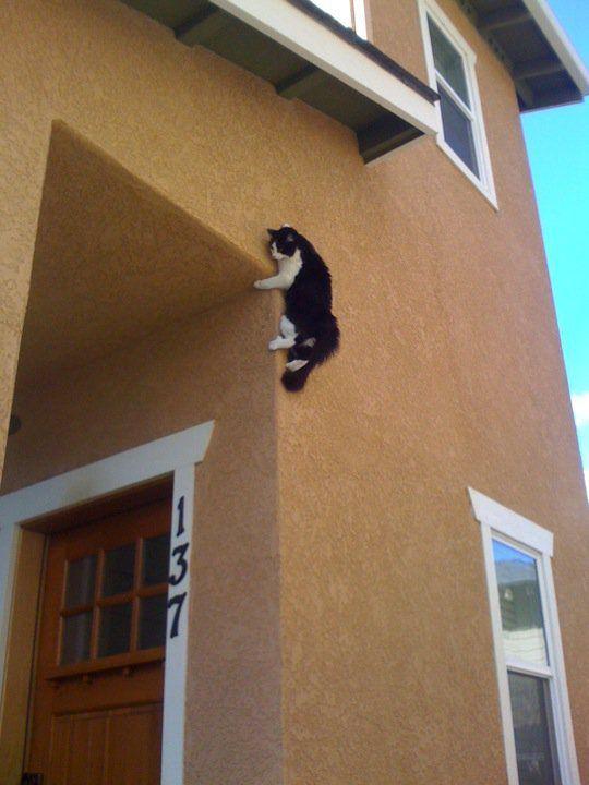 Gatos en la pared - Trepadores para gatos ...
