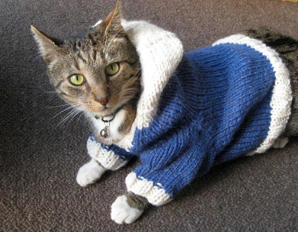 gatos_con_ropa10