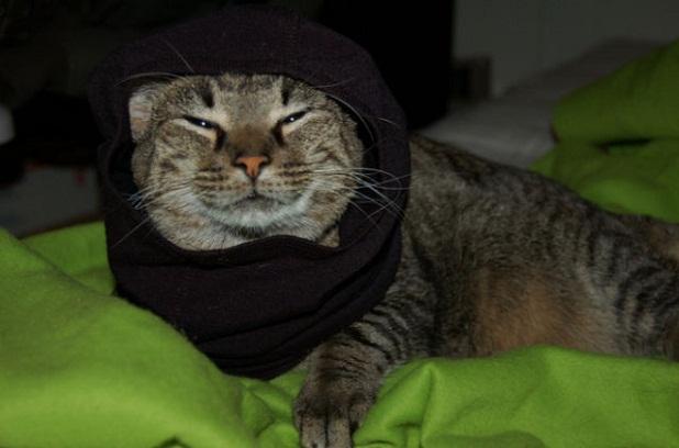 gatos_con_ropa12