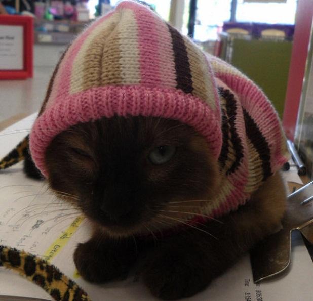 gatos_con_ropa13