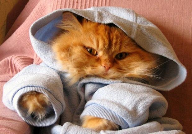gatos_con_ropa15