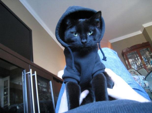gatos_con_ropa17