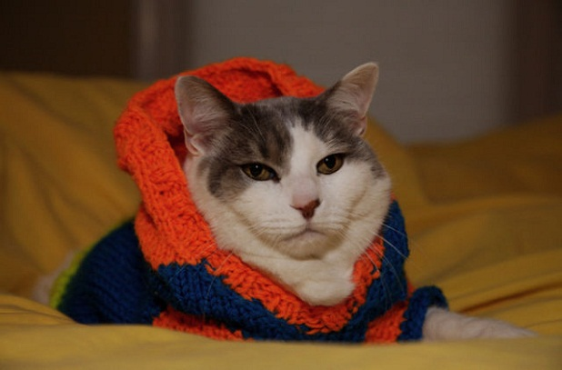 gatos_con_ropa19