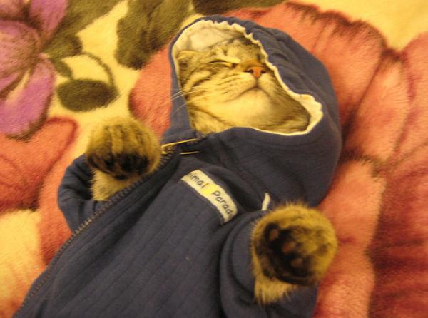 gatos_con_ropa20