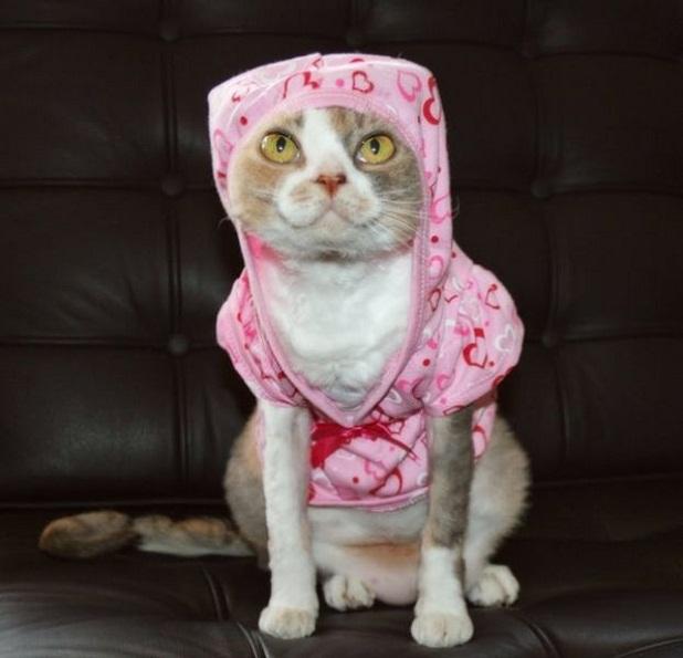 gatos_con_ropa6