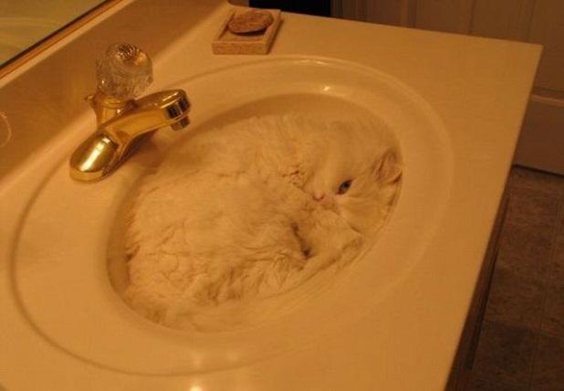 gato en el lavabo Gato en el lavabo