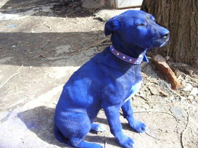 Fotos del perro mas grande del mundo 2011