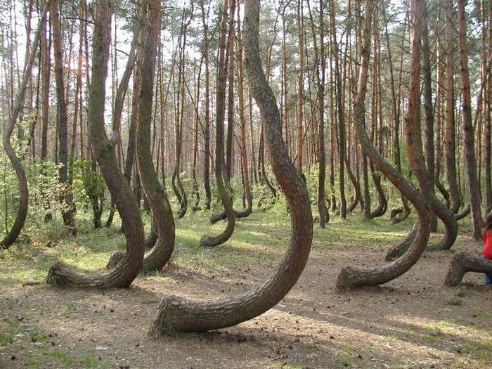 arboles doblados Árboles con el tronco doblado