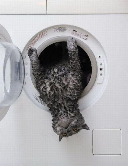 C mo lavar al gato en la lavadora - Lavar almohadas en lavadora ...
