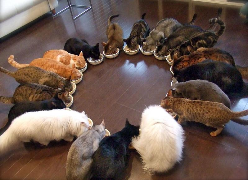 Tener Muchos Gatos En Casa
