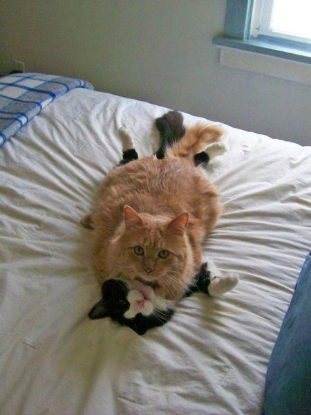 estos gatos fueron pillados haciendo el amor no hay excusa que valga
