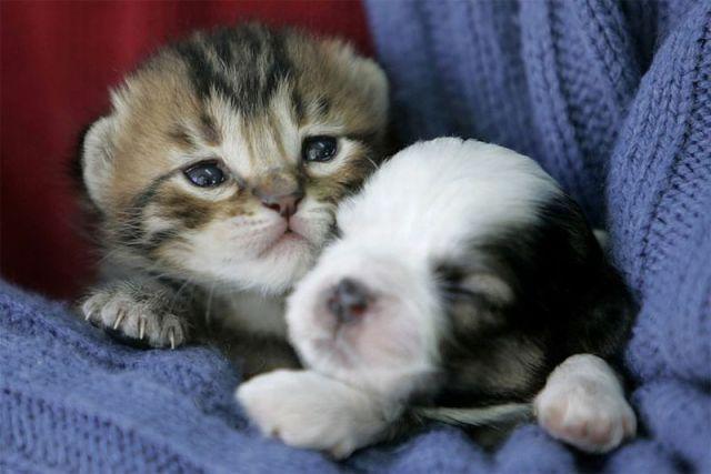 Gatito y perrito tiernos - Imagui
