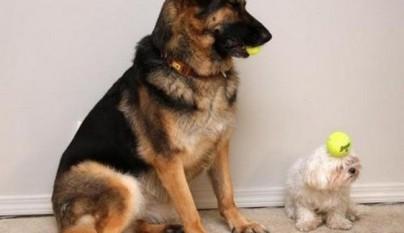 fotos graciosas de perros3