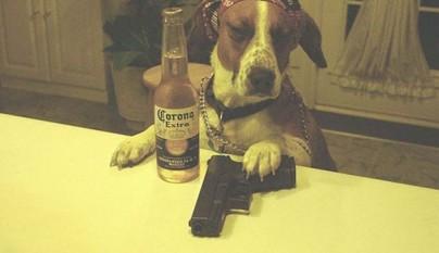 fotos graciosas de perros6