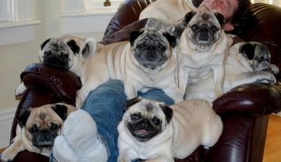 fotos graciosas de perros8