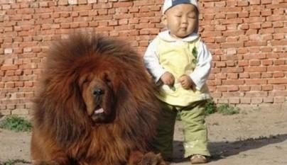 fotos graciosas de perros9