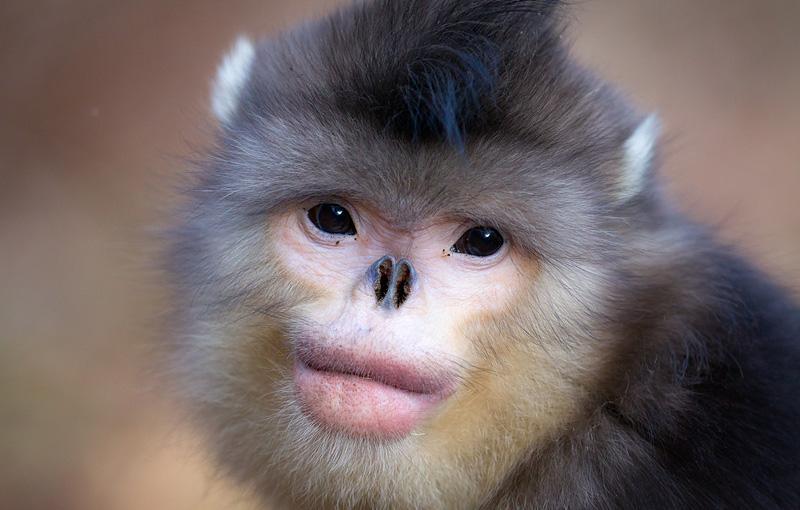 animales11 Los animales más extraños del planeta