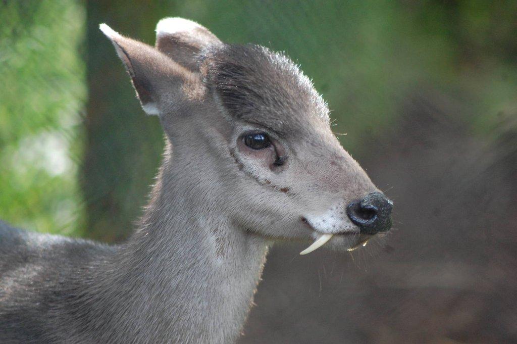 animales17 Los animales más extraños del planeta