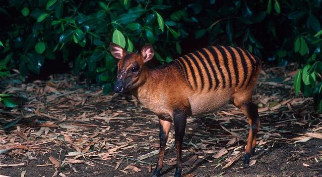 animales22 Los animales más extraños del planeta
