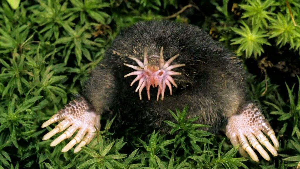 animales23 Los animales más extraños del planeta