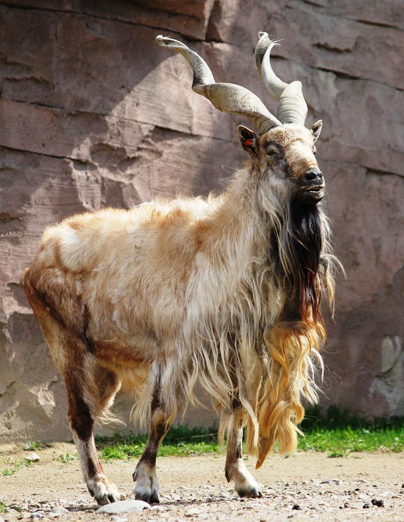 animales9 Los animales más extraños del planeta
