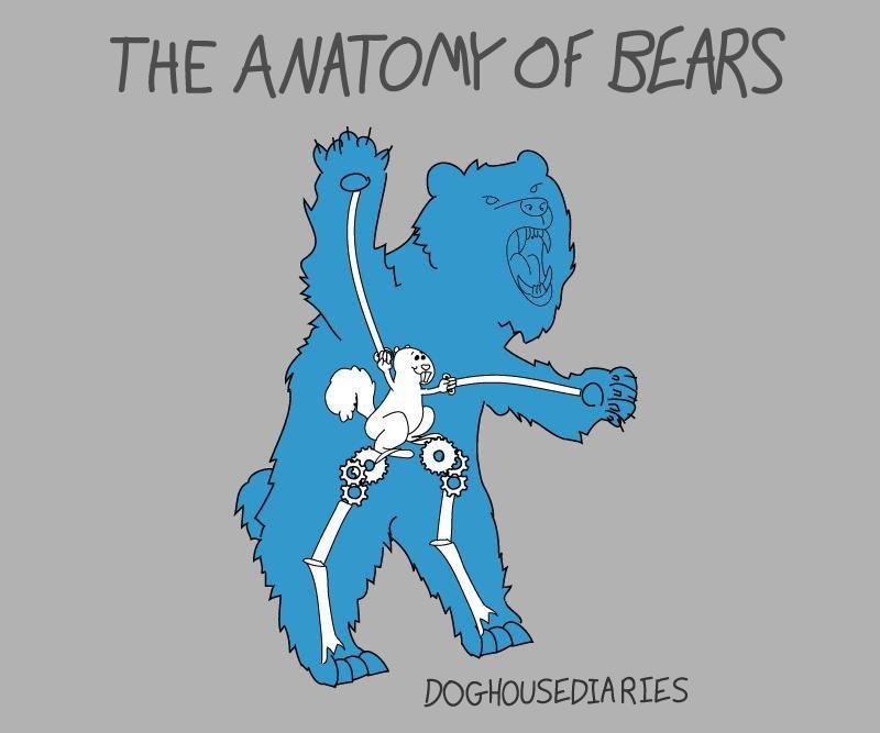 La anatomía de los osos