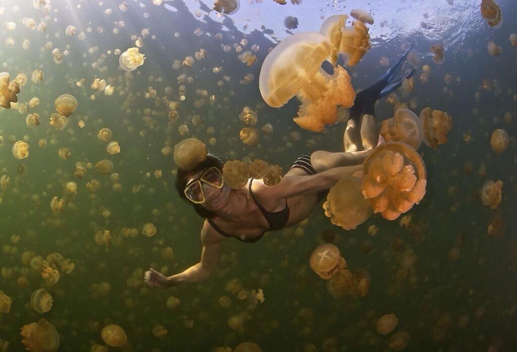 buceando con medusas