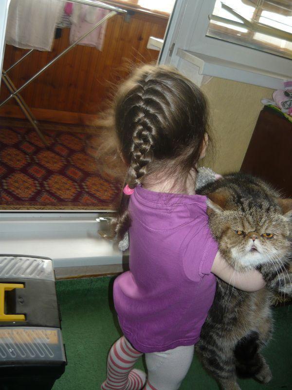 gato pidiendo ayuda