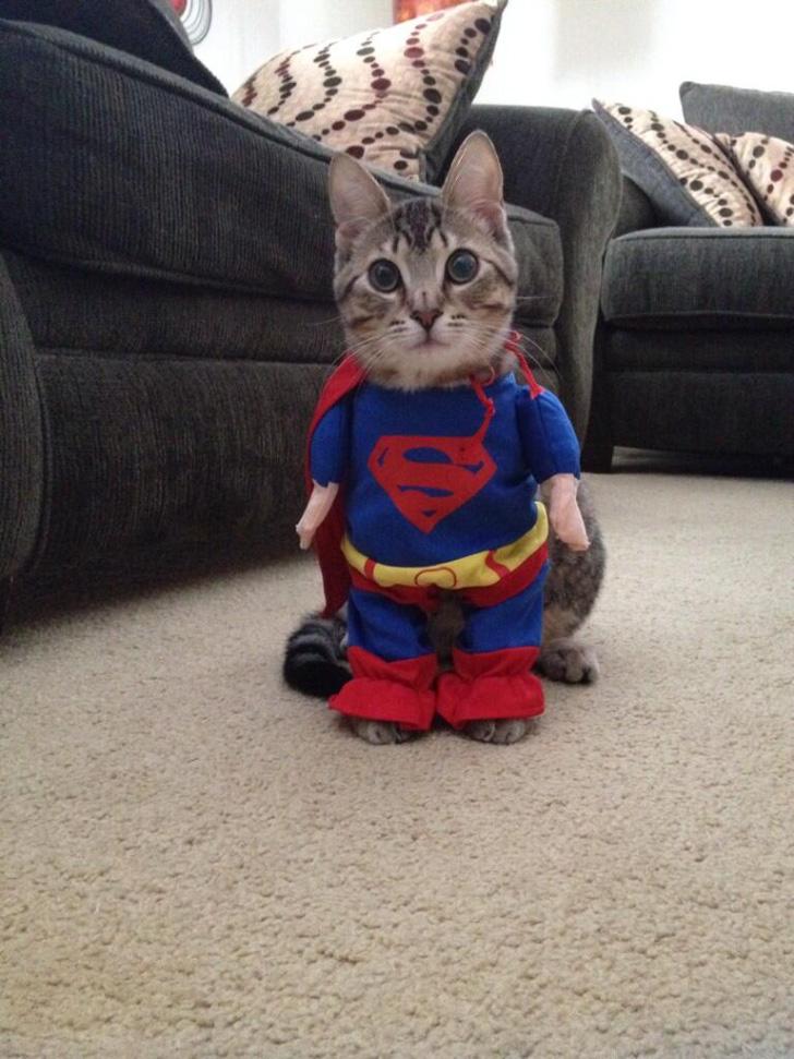 gato superman