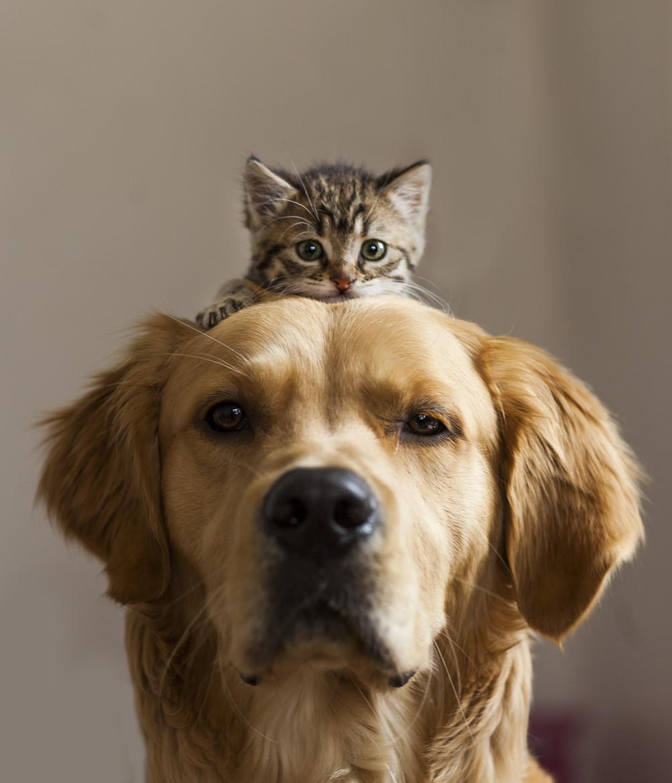 gatito encima de un perro