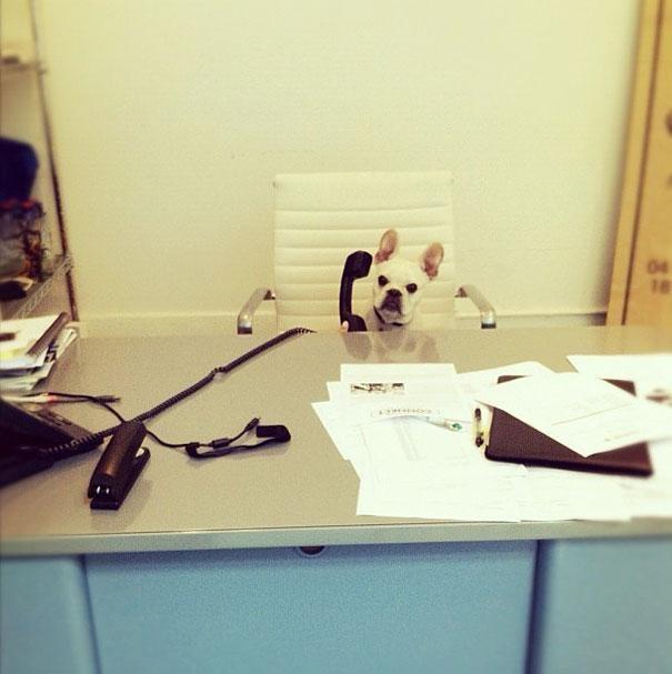 mi jefe tiene cara de perro