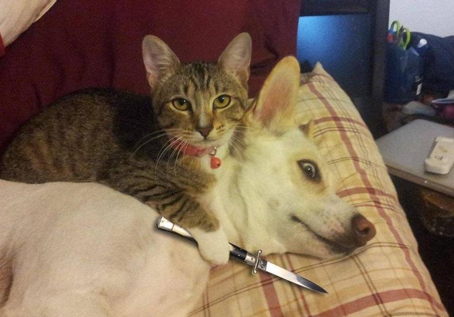 perro amenazado por un gato