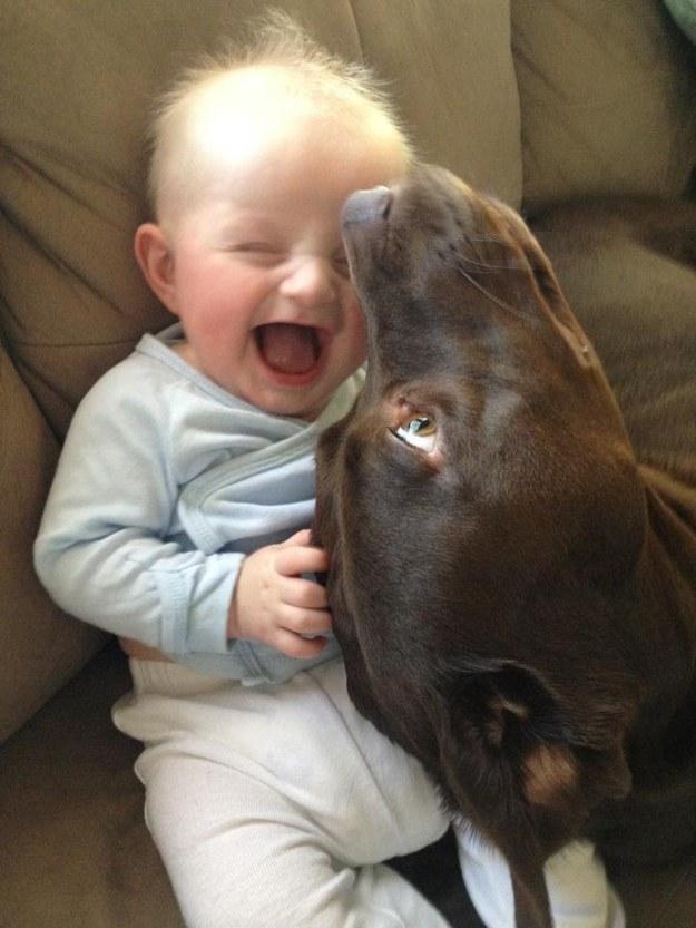 perro jugando con un bebe