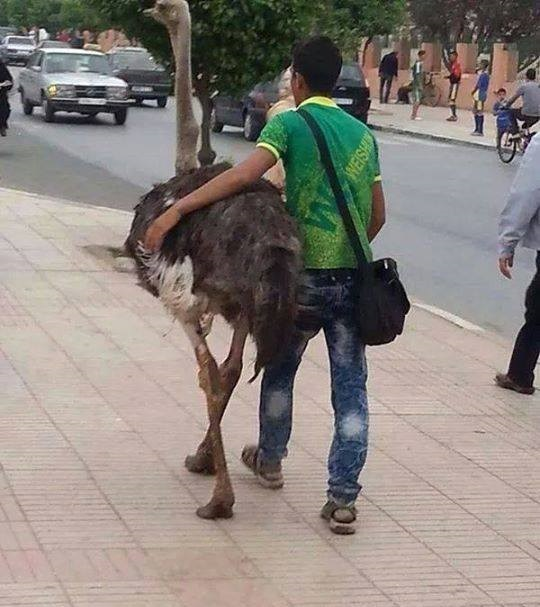 salir con un avestruz