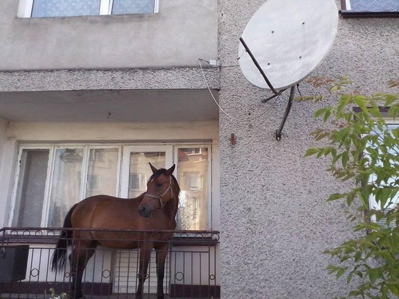 caballo en un balcon