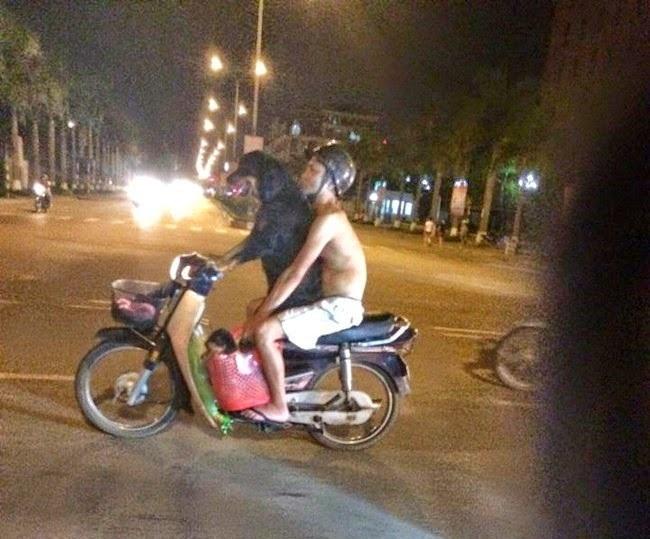 perro conduciendo una moto