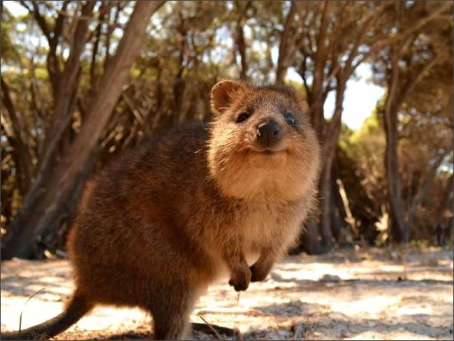 marsupial 3
